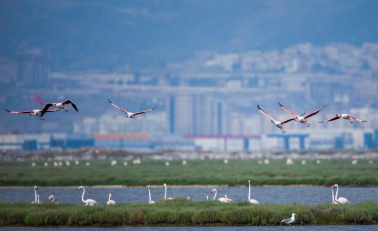 İzmir'in Gediz Deltası Türkiye'nin İlk UNESCO Dünya Doğa Mirası Olabilir