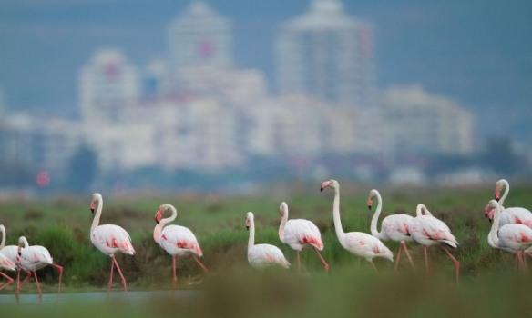 İzmir'in Gediz Deltası'nın UNESCO Dünya Doğa Mirası İlan Edilmesi İçin İmza Kampanyası Başladı